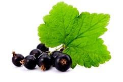 Полезный чай из листьев черной смородины