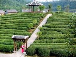 Выдержанный, старый чай. Культура выдерживания чаев в Китае