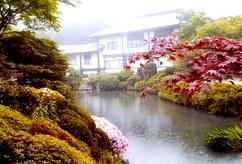 Описание пяти известных сортов японского зеленого чая