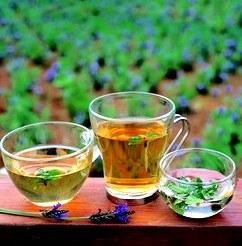 Лучшие зеленые чаи и их описание